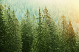 Why Evergreen Content is the Key to Monetization
