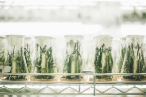 Roundup : Using Science to Grow Your Business | The Sterling Woods Group